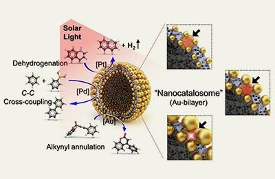 화학 이인수 교수팀, 태양광으로 물질 만드는 '세포' 닮은 촉매 나왔다